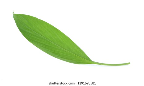 Fresh leaves of turmeric (Curcuma longa) ginger medicinal herbal plant isolated on white background, clipping path included.