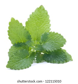 Fresh lemon balm