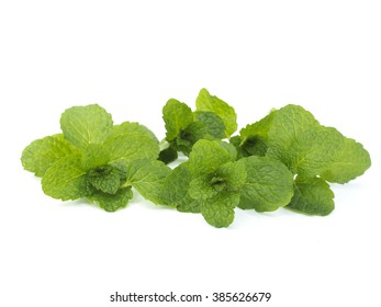 Fresh lemon balm bunch isolated on white background