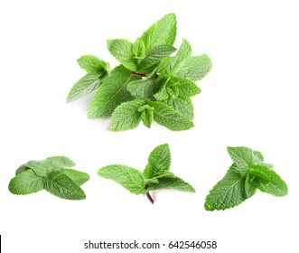 Fresh lemon balm leaves on white background