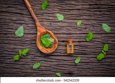 Fresh lemon balm leaves in spoon setup with flat lay on shabby wooden table. Melissa tincture essential oil in glass bottle with fresh leaves and copy space.