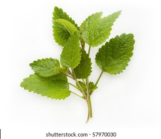 Fresh lemon balm (melissa) isolated on white background