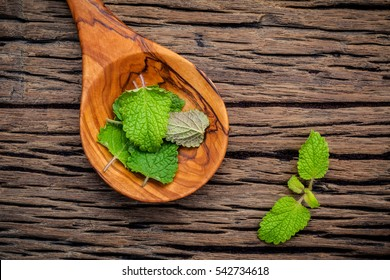 Fresh lemon balm ( Melissa tincture) leaves in spoon setup with flat lay on shabby wooden table.