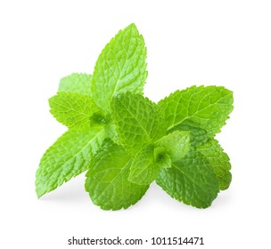 Fresh lemon balm on white background