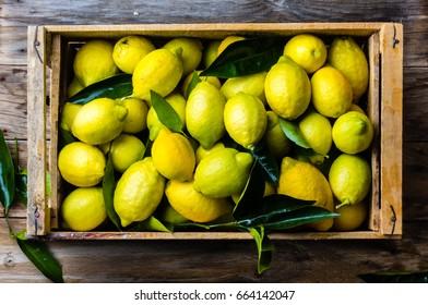 Frische Zitrone mit Blättern. Zitronenbaum. Box mit gelben Zitronen mit frischen Zitronenblättern auf Holzhintergrund. Draufsicht
