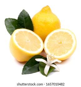 Citron frais sur fond blanc