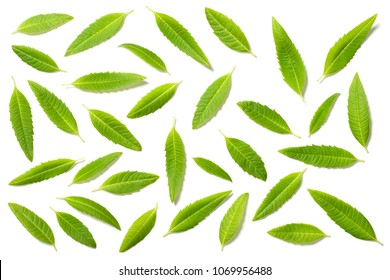 fresh lemon verbena leaves isolated on white, top view