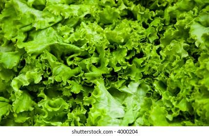 fresh lettuce green at a farmers market