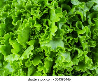 Fresh lettuce leaves, close up.