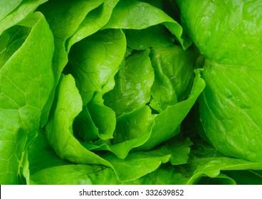 Fresh lettuce leaves, close up.