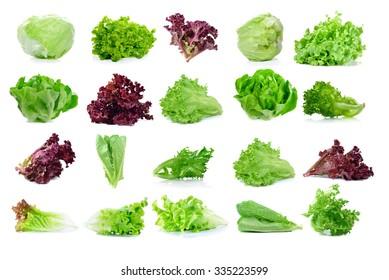 fresh  lettuce leaves isolated on white