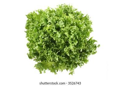 fresh lettuce - lollo bindo - isolated on white