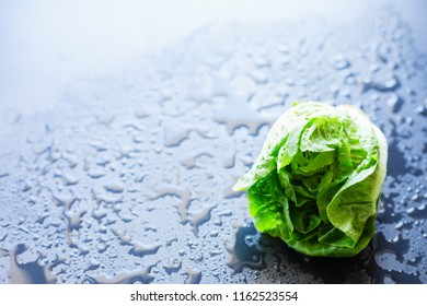 Fresh lettuce on a black background, selective focus