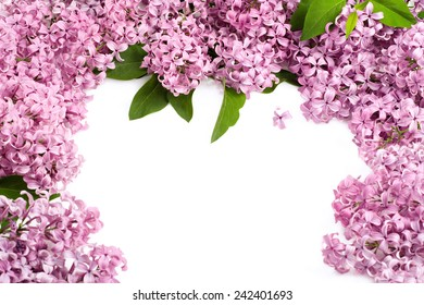 Fresh lilac border for spring, Easter and Mother's Day themes.
