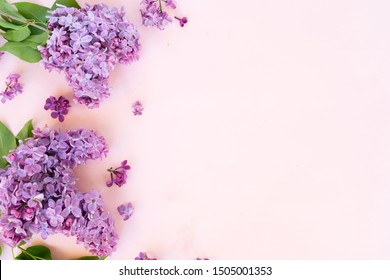 Fresh lilac flowers border over pink background with copy space, flat lay floral composition over pink