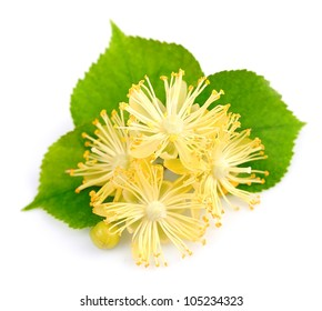 fresh lime flowers on a white background