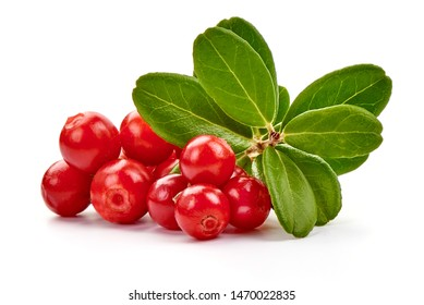 Fresh lingonberry with leaves, isolated on white background.