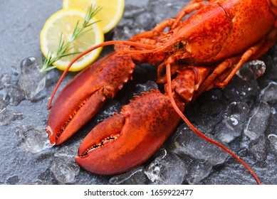 Fresh lobster food on a black plate background / red lobster dinner seafood with herb spices lemon rosemary served table and ice in the restaurant gourmet food healthy boiled lobster cooked