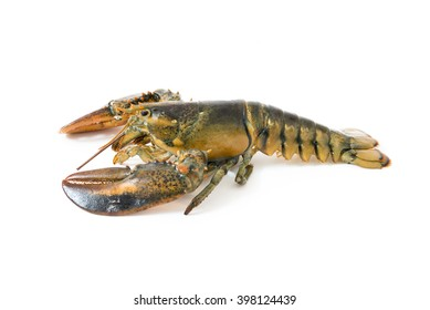 The fresh lobster on white background