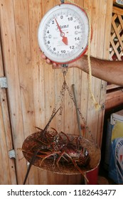 fresh lobster in a restaurant in the village on the Gran Roque Island at the Los Roques Islands in the caribbean sea of Venezuela.     Venezuela, Los Roques, November, 2018