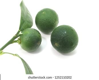 Fresh local calamansi or limau kasturi (citrus microcarpa) on white background.