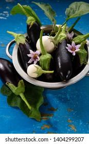 Fresh local eggplants in colander