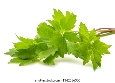 Fresh lovage  (Levisticum officinale) isolated on white background