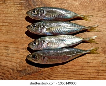 Fresh mackerel fish background display in market. Sea little fish mackerel saurels or sardine trachurus top view on wooden table. Mediterranean food mackerel meat background seafood. Indian fish shop