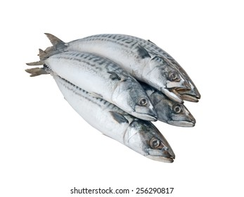 Fresh mackerel fish isolated