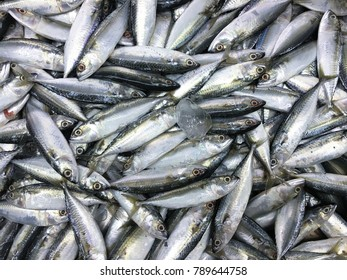 Fresh mackerel fish in market , Sea fish mackerel pile top view.