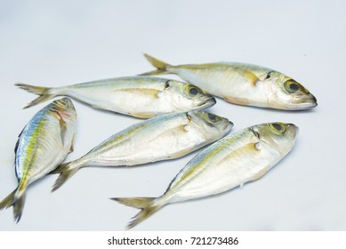 Fresh Mackerel Fish Over White Background