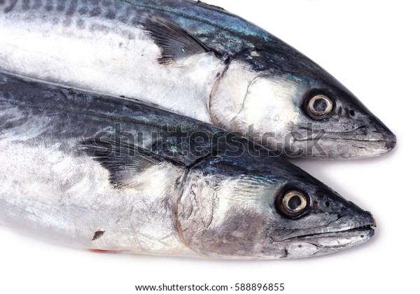 fresh mackerel fish over white background