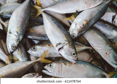 Fresh mackerel fish at the seafood market, Traditional fish in market. Soft focus - Abstract blur for background.