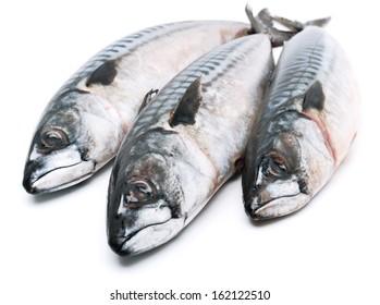 Fresh mackerel fishes isolated on white