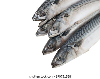 Fresh mackerel fishes isolated on white