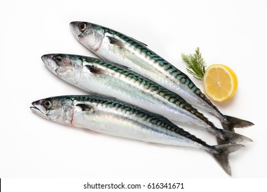 Fresh mackerel fishes on white background