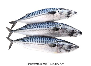 Fresh mackerel raw fishes isolated on white.