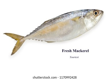 fresh mackerel,isolated on white background with clipping path.