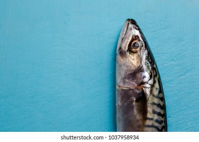 Fresh mackerels on vibrant blue chopping board close up view on head with text space on left hand side