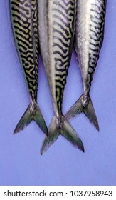 Fresh mackerels on vibrant ultra violet chopping board close up view