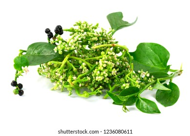fresh malabar spinach or Ceylon spinach or Basellaceae isolated on white background