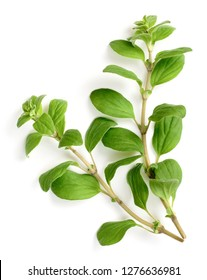 fresh marjoram herb isolated on the white background, side view