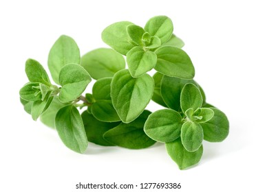 fresh marjoram herb isolated on the white background