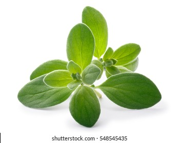 Fresh Marjoram (Origanum majorana), tops, close up. Clipping paths, shadows separated