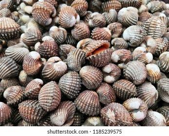 Fresh Cockles in the market