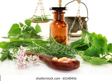 fresh medicinal herbs and spices on a white background