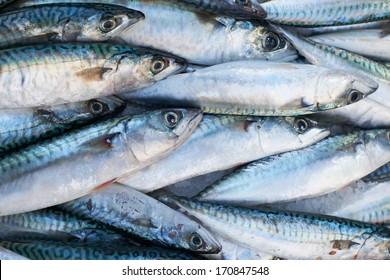 Fresh mediterranean mackerel  fish for sale on market of Marseille, France