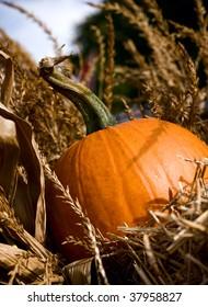 Fresh medium size pumpkin sitting in the hay