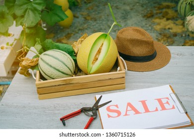 Fresh melon just cut from the garden and put it in a wooden basket with sale label