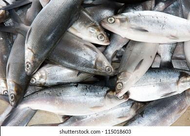 Fresh milkfish (bangus) in a Philippines fish market.